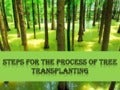 Steps for the process of tree transplanting