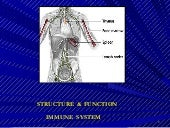 Structure of immune system mbbs