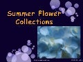 Summer Flower Collections