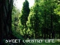 Sweet Country Life
