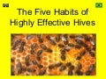 The five habits of highly effective hives
