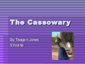 Teagan j the cassowary