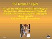 Temple of the Tigers