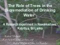 The Role Of Trees in the Bioremediation of Drinking Water