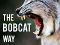 The Bobcat Way (Seneca High School Expectations)