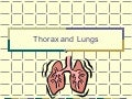 NurseReview.Org Thorax & Lungs