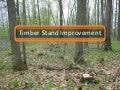 Timber Stand Improvement