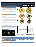 Poster19: Tolerance to waterlogging in Brachiaria genotypes: the role of root aerenchyma development