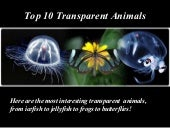 Top 10 Transparent Animals