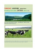Turkont cattles farme  salt okunur 4