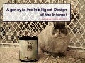Agency Is the Intelligent Design of the Internet