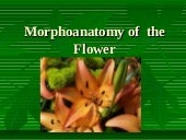 Flower Morphology 2 (updated)