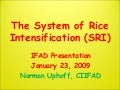 The System of Rice Intensification (SRI)