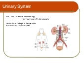 Urinary System Terminology