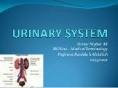 Urinary system medical term