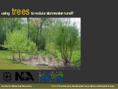 Using Trees To Reduce Stormwater Ru...