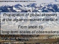 Propagation of global stressors at the algae-consumer interface: From short- to long-term scales of observations [Manuel Villar-Argaiz]