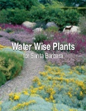 Water Wise Plants for Santa Barbara