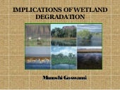 Impacts of wetland degradation