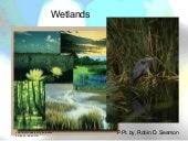 Wetlands:  notes on different wetla...