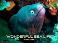 Wonderful Sea Life Part One (Pp Tminimizer)
