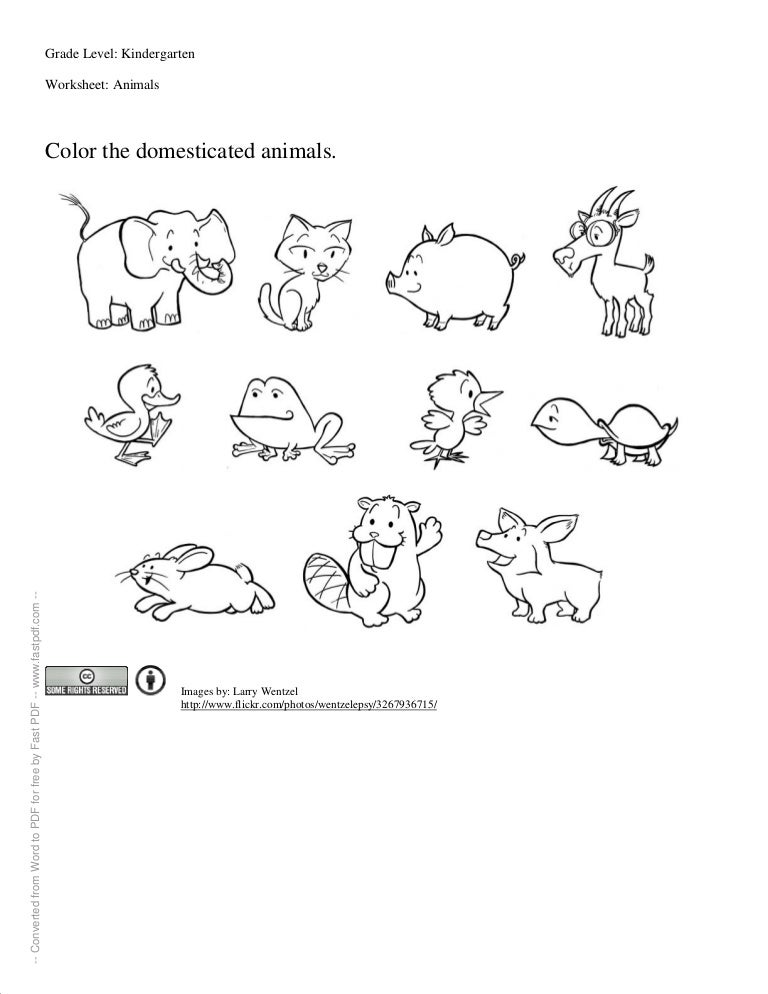math worksheet : worksheet for kindergartners : Wild Animals Worksheets For Kindergarten