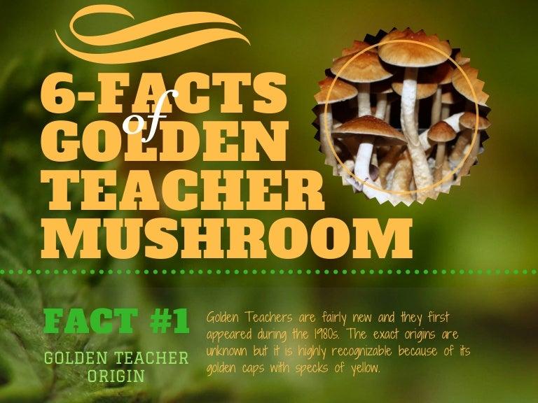 6 Facts of Golden Teacher Mushroom