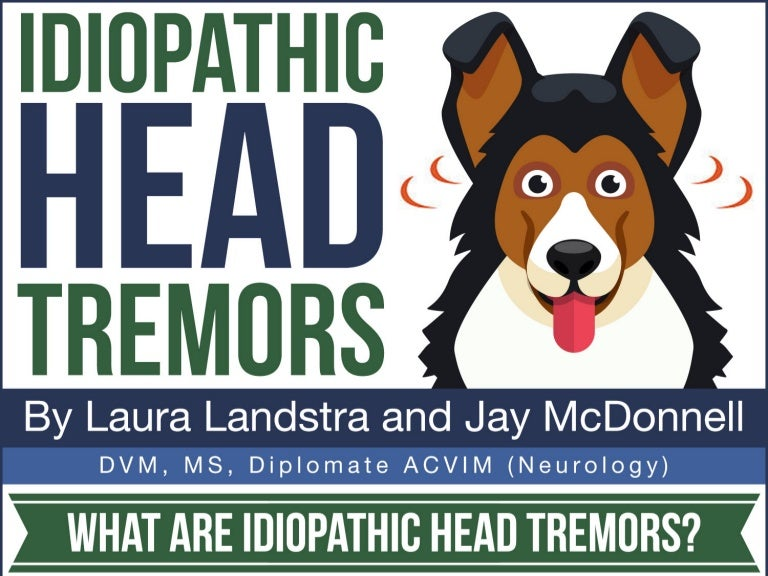 Idiopathic head tremors in dogs infographic