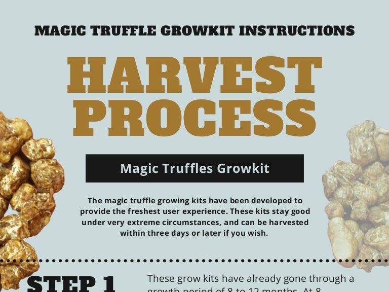 Magic Truffles Growkit Instructions and Harvest Process