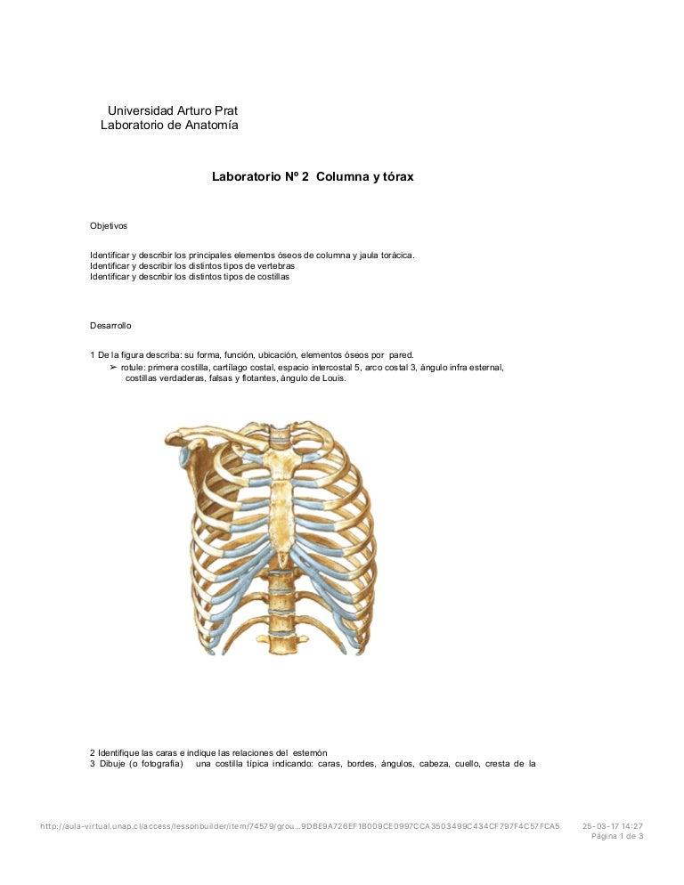 Columna y torax Anatomia