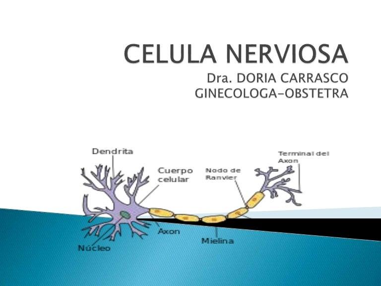 006 celula nerviosa