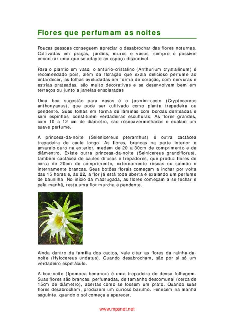 Jardinagem para leigos e experts