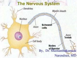 Central Nervous System.ppt