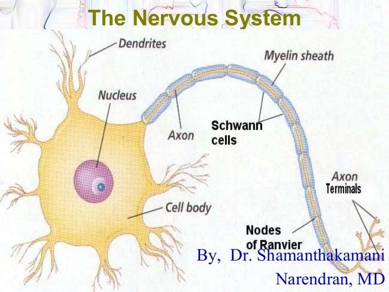 Central Nervous Systemppt