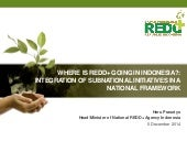 Where is REDD+ going in Indonesia?