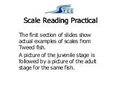 SFCC Scale Reading Practical - 2017