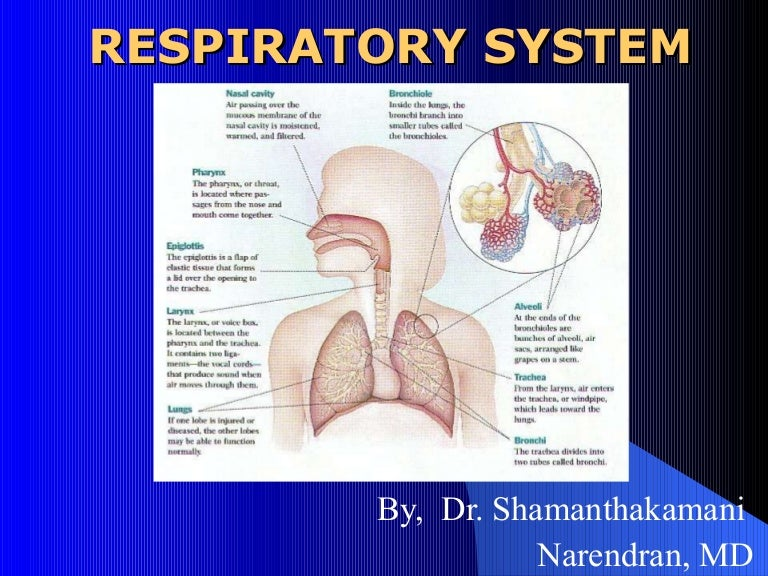 how to improve your respiratory system