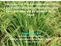 0612 The System of Rice Intensification (SRI): A Good Alternative for Increasiing Irrigated Rice Cultivation and its Productivity in Nepal