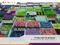 Marketing & Supply Chain FloraHolland for HvA