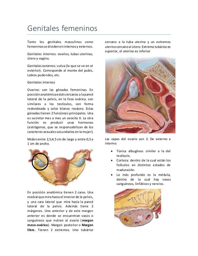Nos vasos testículos dilatados sanguíneos