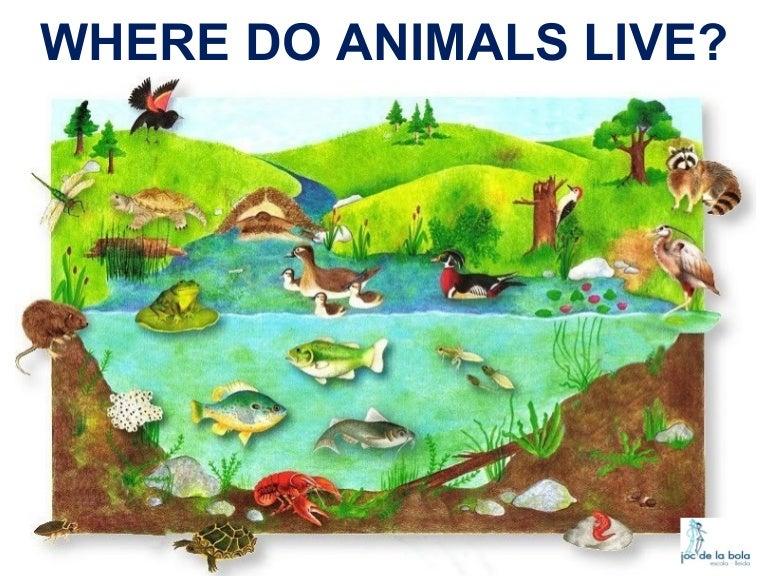 where do animals live