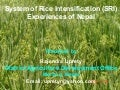 0865 System of Rice Intensification (SRI): Experiences of Nepal
