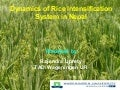 0914 Dynamics of Rice Intensification System in Nepal