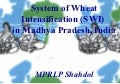 0918 System of Wheat Intensification (SWI) in Madhya Pradesh, India