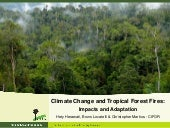 Forests, fire and climate change dynamics