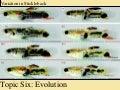 Topic 6: Evolution