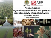Mycorrhizal research of local  tree species for restoration activity in tropical peat swamp forests of Sumatra