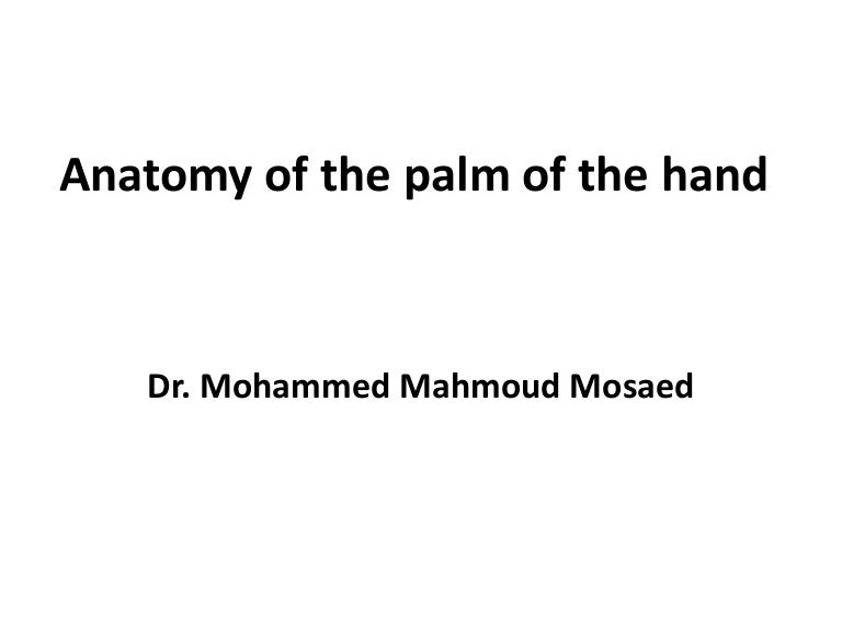 10 Anatomy Of The Palm Of The Hand
