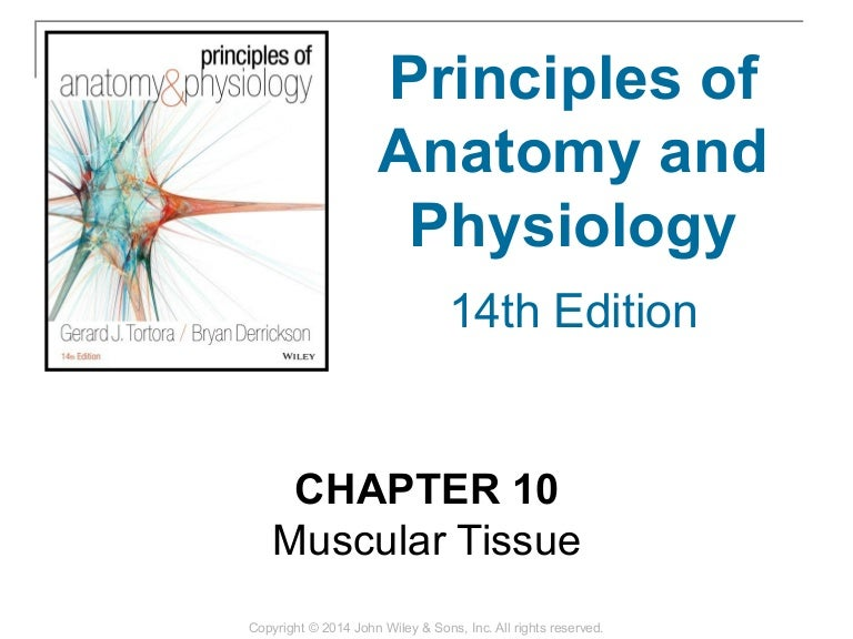 10 [chapter 10 muscular tissue]