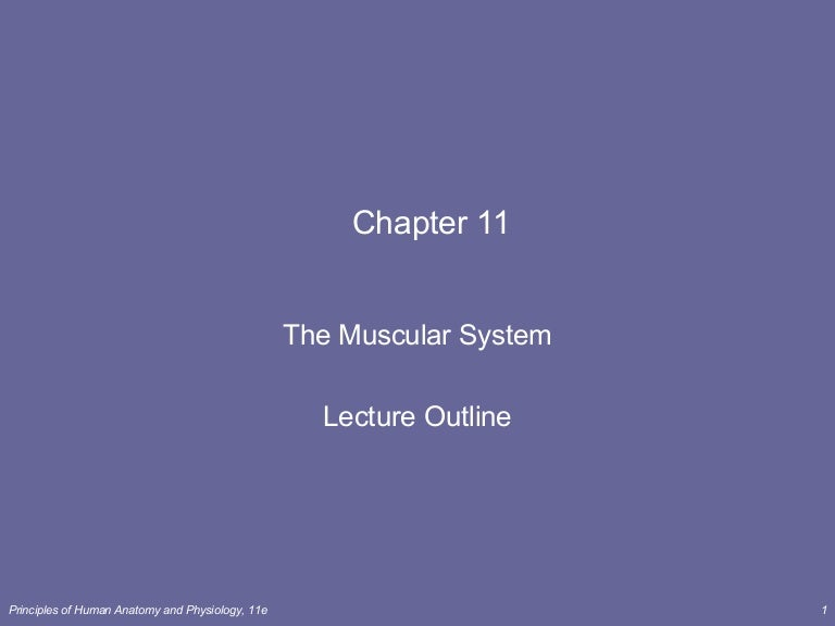 11 [chapter 11 the muscular system][11e]